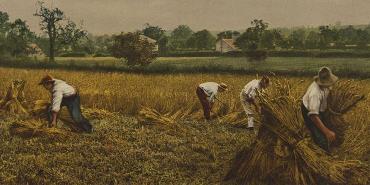 Zürcher Landleben – Landwirtschaft und ländliches Lebensumfeld im Spiegel handschriftlicher Zeugnisse