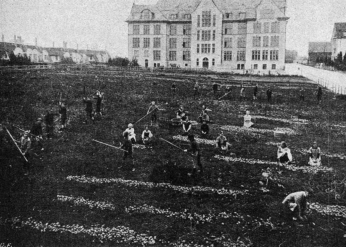 Schülerinnen und Schüler bei der Kartoffelernte 1918 beim Schulhaus Bühl in Wiedikon. Im Hintergrund das Schulhaus.